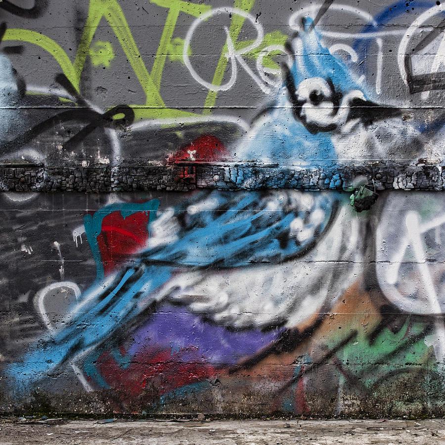 Graffiti Photograph - Graffiti Bluejay by Carol Leigh