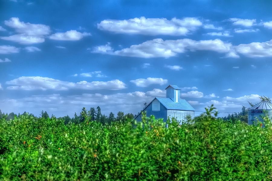 Grain Bin Elevator And Vineyard 17024 Photograph