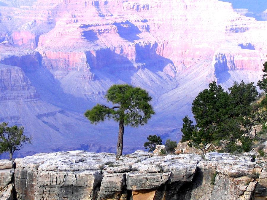 Grand Canyon Photograph - Grand Canyon 73 by Will Borden