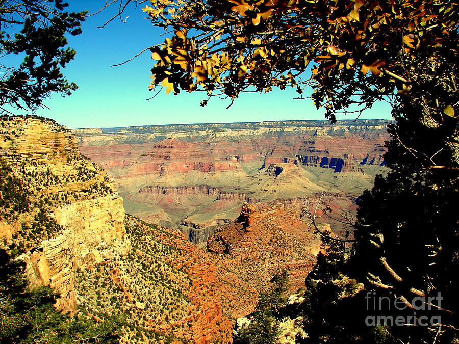 Grand Canyon Photograph - Grand Canyon Framed By Nature by John Potts