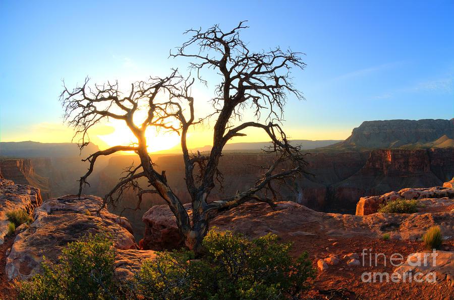 Grand Canyon Photograph - Grand Canyon Gathering The Light by Bob Christopher