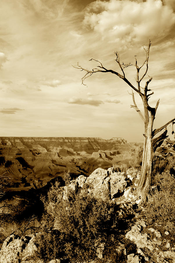Sepia Tone Photograph - Grand Canyon Sepia by T C Brown