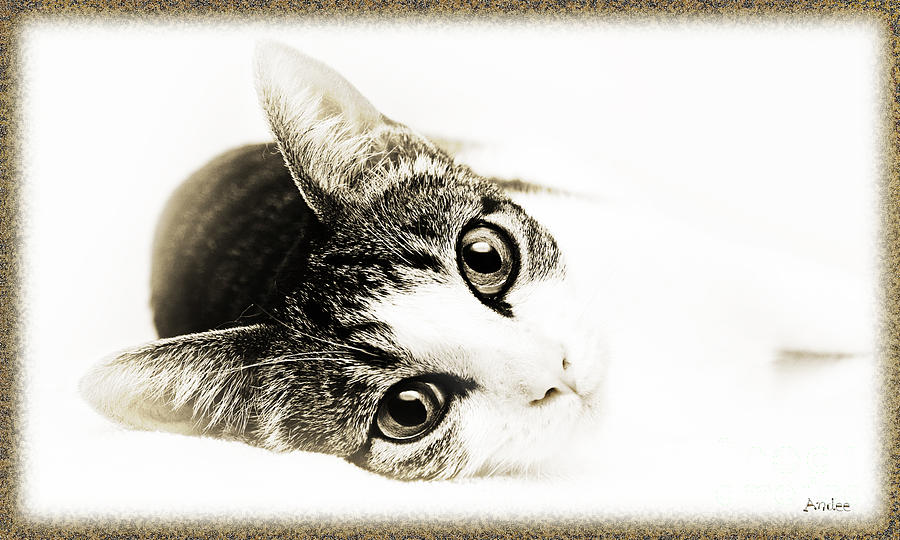 Kitten Photograph - Grand Kitty Cuteness 3 High Key by Andee Design