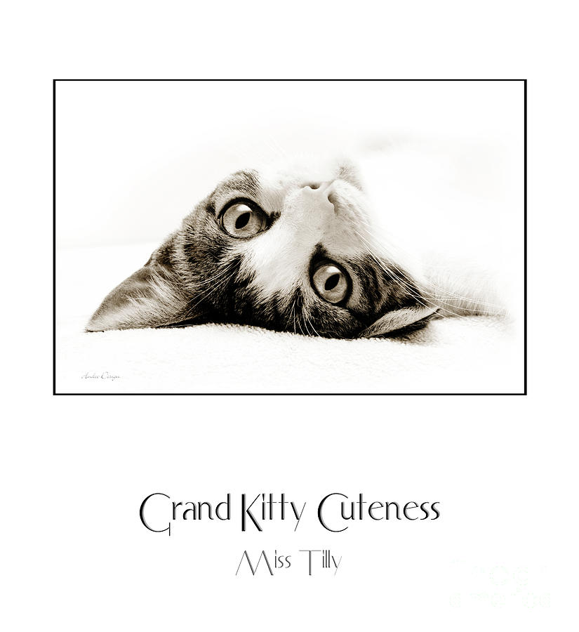 Kitten Photograph - Grand Kitty Cuteness Miss Tilly Poster by Andee Design