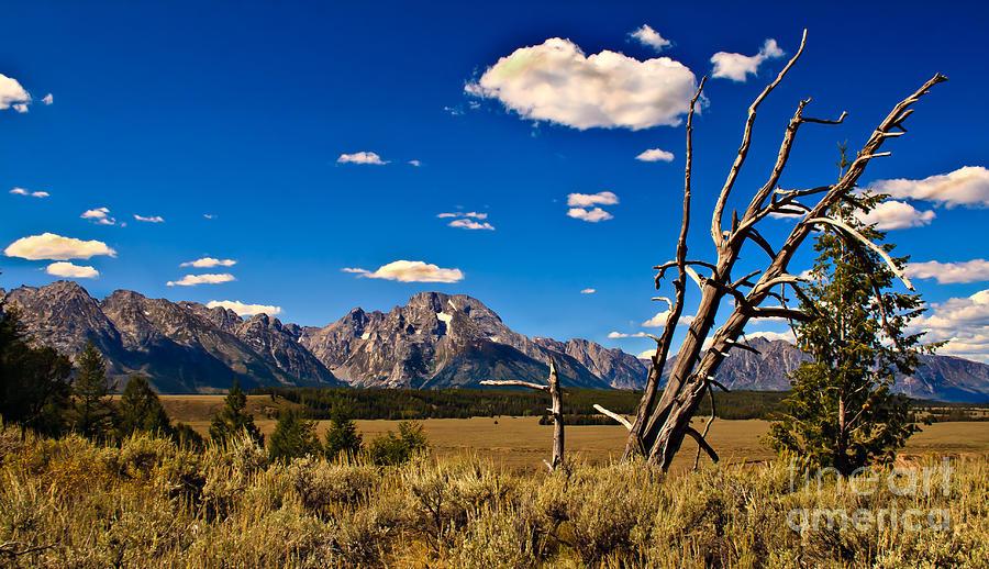 Grand Tetons Photograph - Grand Tenton Overlook by Robert Bales