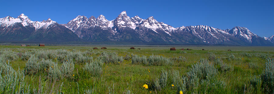 Landscape Photograph - Grand Teton Bison by Brian Harig