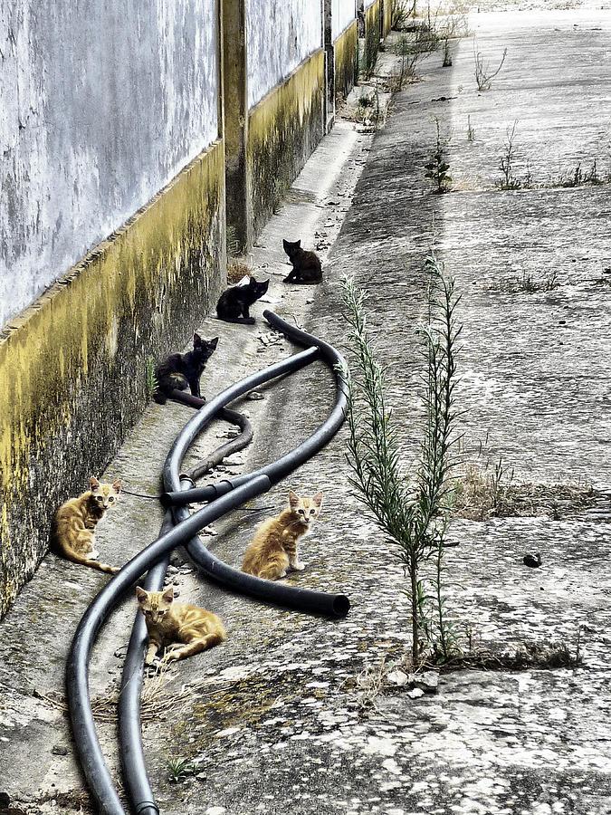 Color Photograph - Grandola Cats by Pedro Fernandez