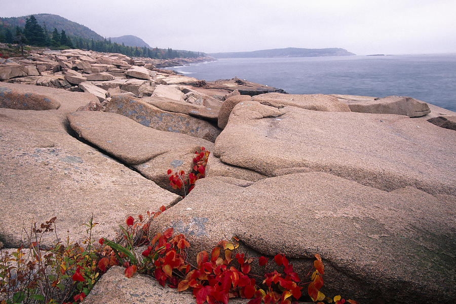 Atlantic Photograph - Granite Rocks Of Otter Point Acadia Natl Park Maine by George Oze