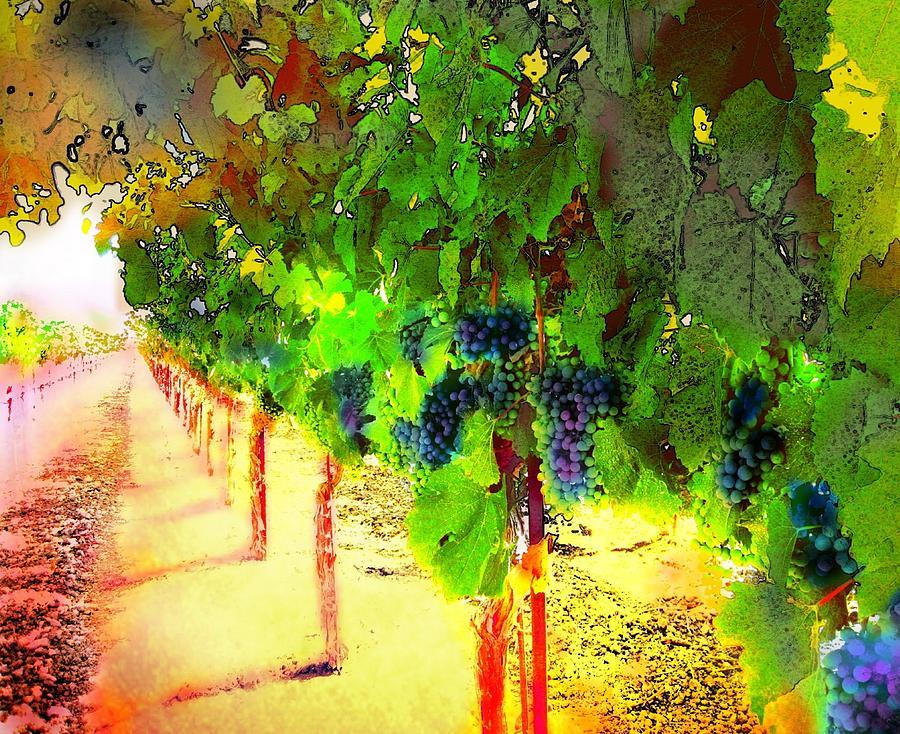 Grapes Digital Art - Grape Vines by Cindy Edwards
