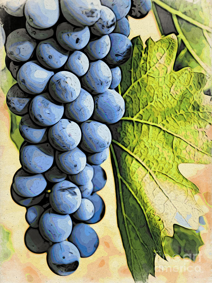 Blue Photograph - Grapes 2 by Jacklyn Duryea Fraizer