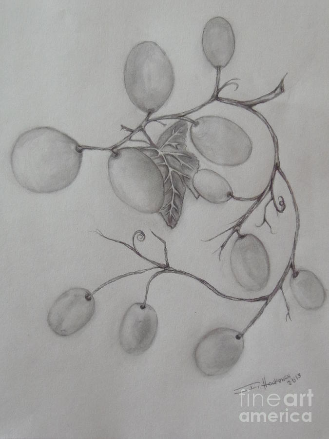Grapes Drawing - Grapes by Isabel Honkonen