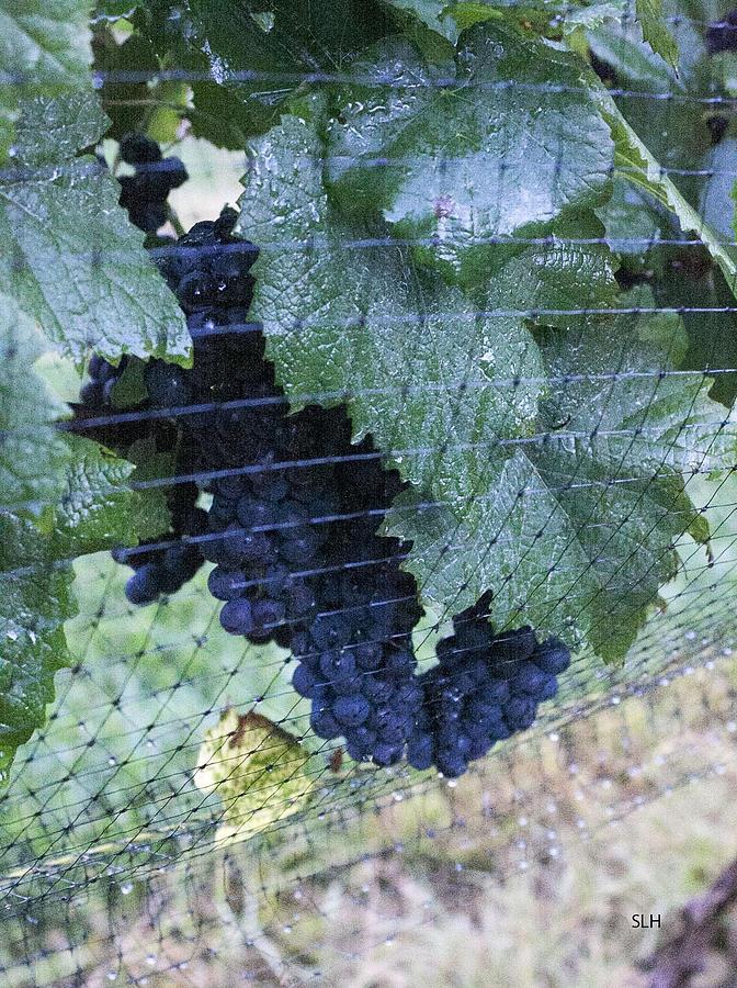 Grapes Photograph - Grapes by Lee Hartsell