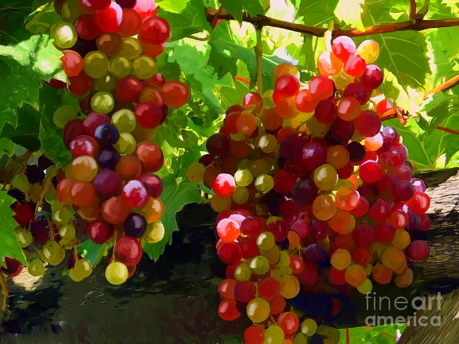 Grapes Painting - Grapes On The Vine by Tim Gilliland