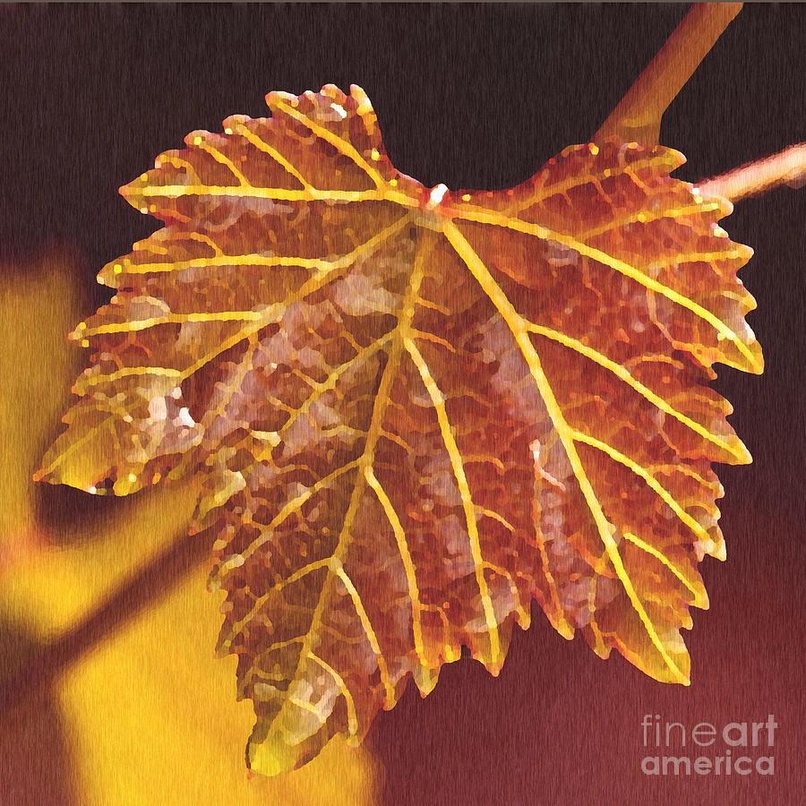 Red Grape Leaf Painting - Grapevine In Fall by Artist and Photographer Laura Wrede