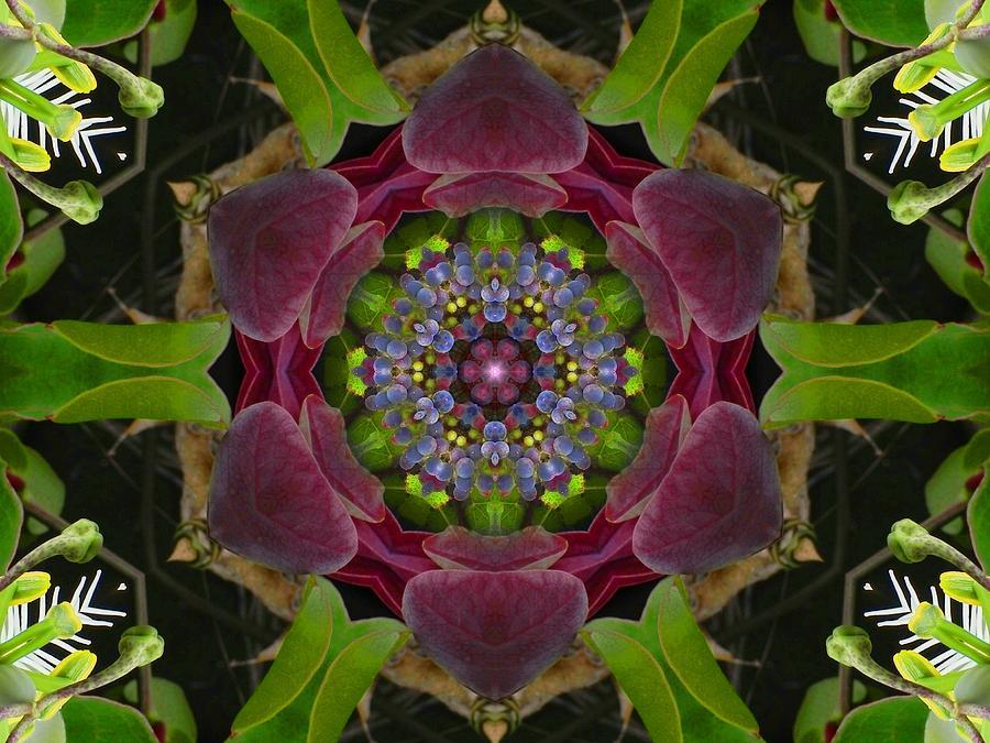 Grapevine Portal Mandala by Diane Lynn Hix