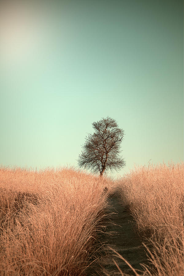 Tree Photograph - Grass And Path by Jaap Van Den