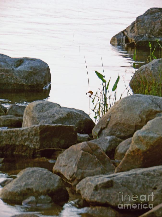 Grass Photograph - Grass And Rocks by Helene Guertin