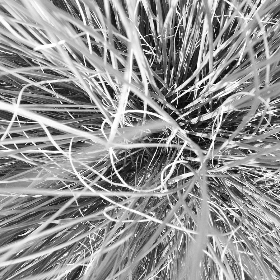 Grass Photograph - Grass by Christy Beckwith