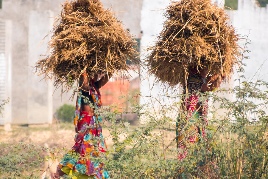 Burden Photograph - Grass Cuttings by Gaurav Singh