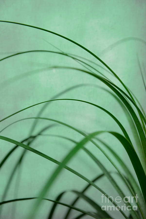 Flow Photograph - Grass Impression by Hannes Cmarits