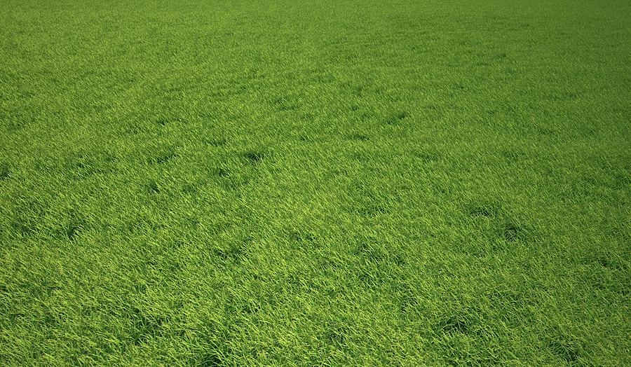 Grass Meadow, Artwork Digital Art by Leonello Calvetti