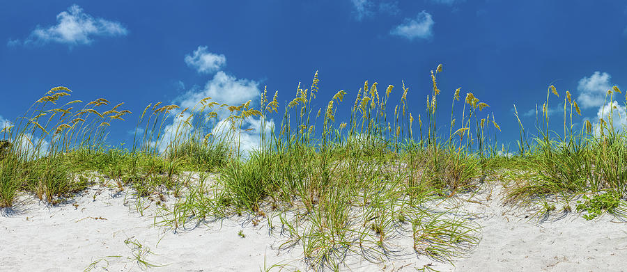 Horizontal Photograph - Grass On The Beach, Bill Baggs Cape by Panoramic Images