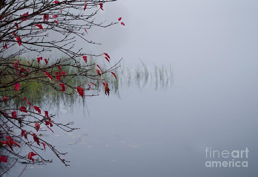 Nature Photograph - Grass by Stephanie Emond