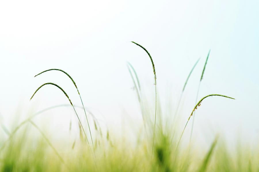 Outdoors Photograph - Grass by Wladimir Bulgar/science Photo Library