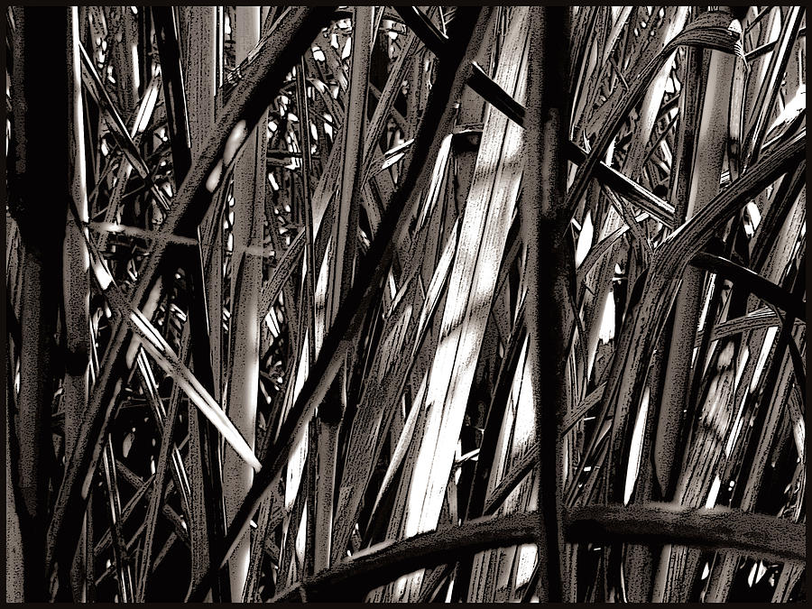 Black & White Photography Photograph - Grasses 2 by Colleen Cannon