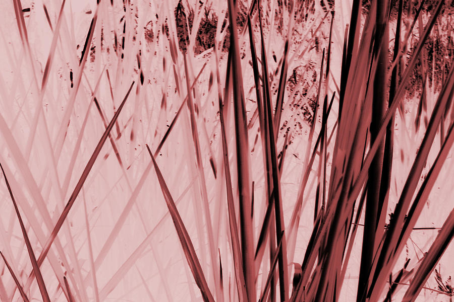 Sepia Tone Nature Photography Photograph - Grasses by Colleen Cannon