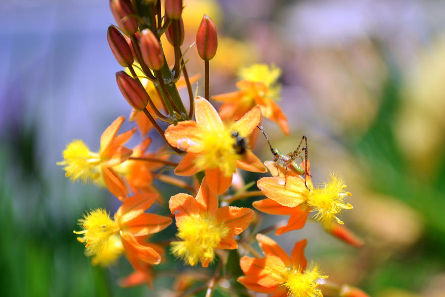 Nature Photograph - Grasshopper And The Bee by Ashley Fortier