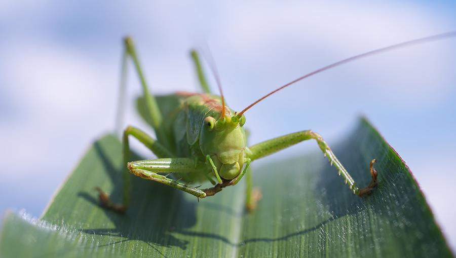 Grasshopper Photograph - Grasshopper by Tilen Hrovatic