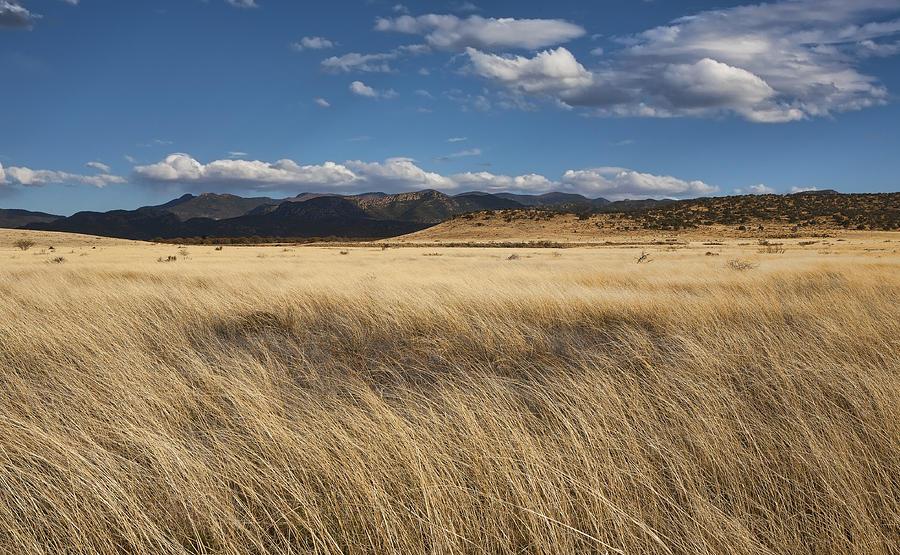 Arizona Photograph - Grassland Expanse by Gregory Scott