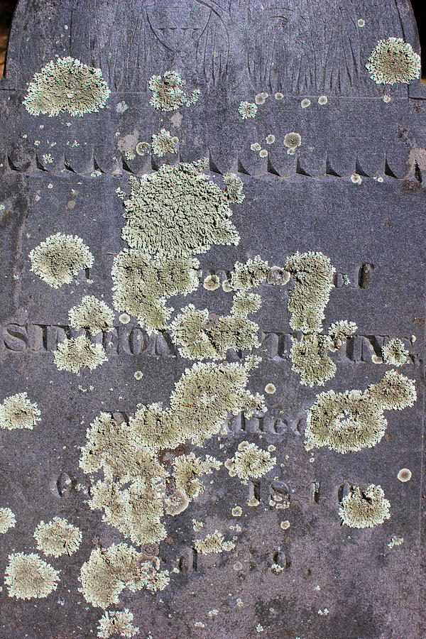 Grave Photograph - Gravestone With Lichen by Mary Bedy