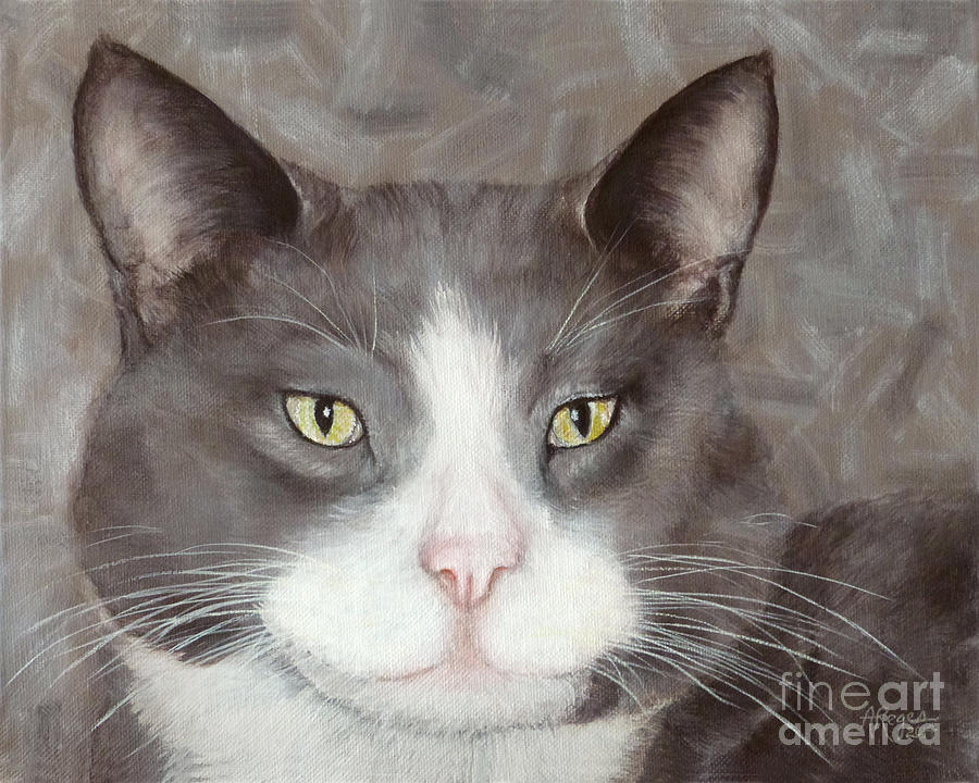 Gray and White Tuxedo Cat by Amy Reges