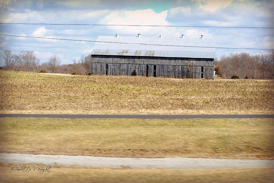 Nature Photograph - Gray Barn In A Cornfield by Paulette B Wright