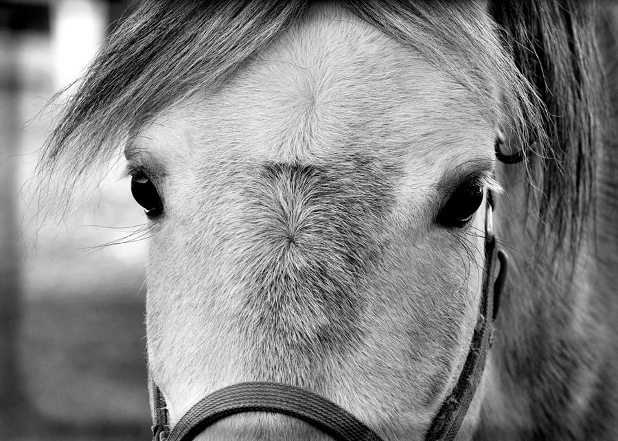 Horse Photograph - Gray On Gray by JAMART Photography