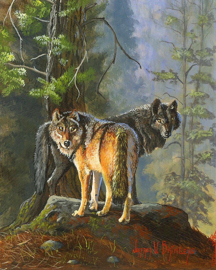 Gray Wolves Jeff Brimley on Painted Metal Wall Art