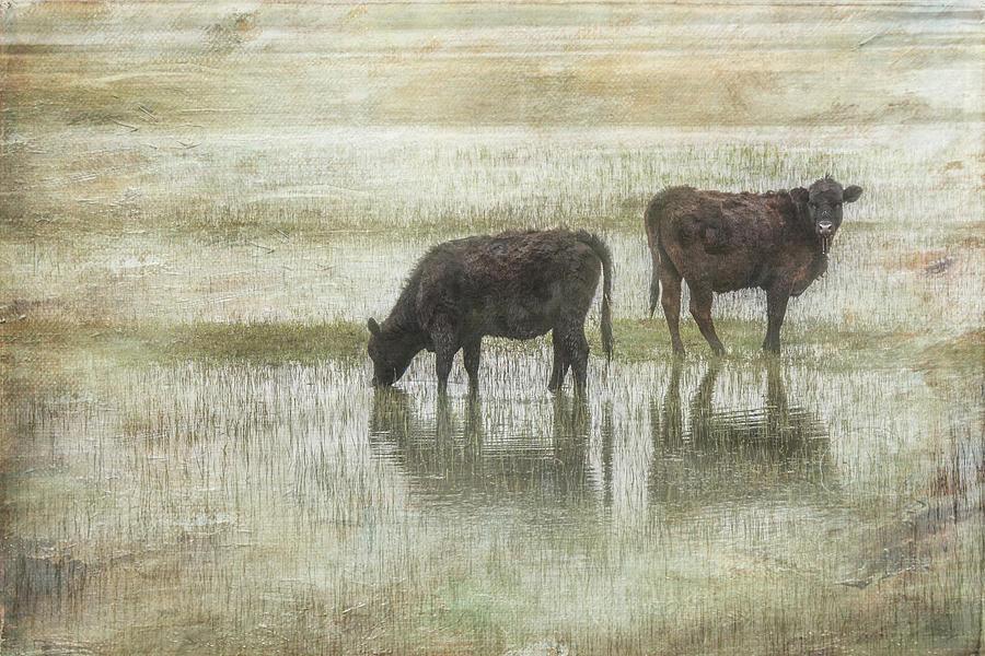 Farm Photograph - Grazin In The Pond by Ramona Murdock
