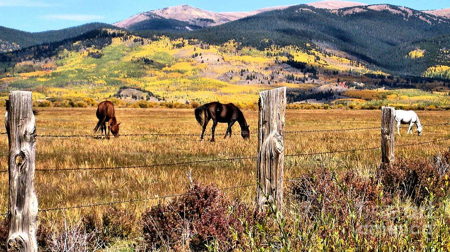 Horses Photograph - Grazing Beauties by Claudette Bujold-Poirier