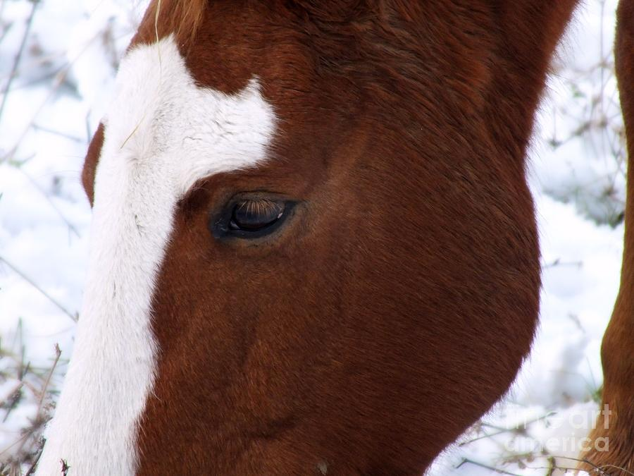 Horse Photograph - Grazing Horse  by Kimberly Maiden