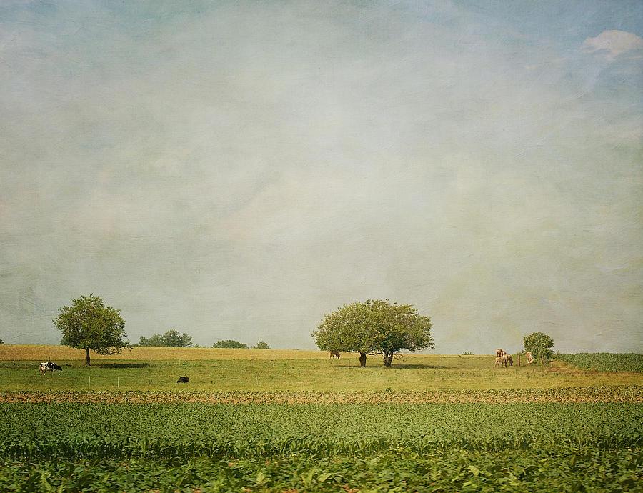 Cow Photograph - Grazing by Kim Hojnacki