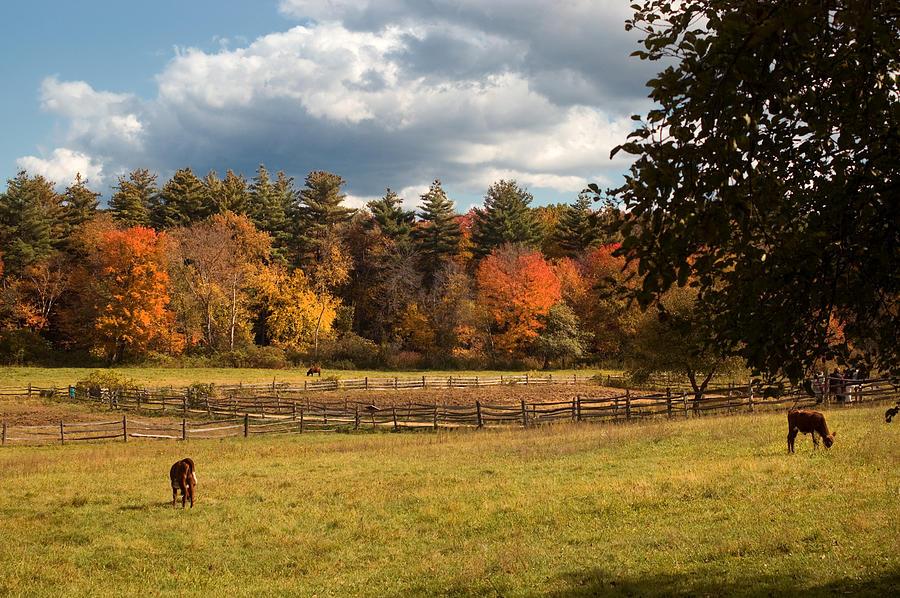 Autumn Photograph - Grazing On The Farm by Joann Vitali