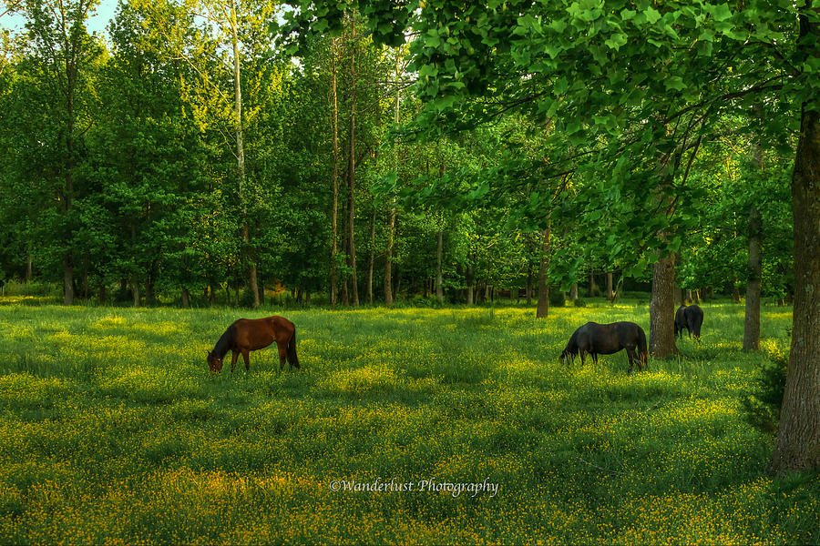 Horses Photograph - Grazing by Paul Herrmann