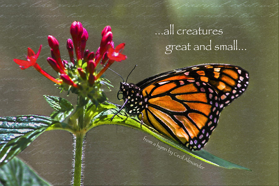 Butterflies Photograph - Great And Small by Karen Stephenson