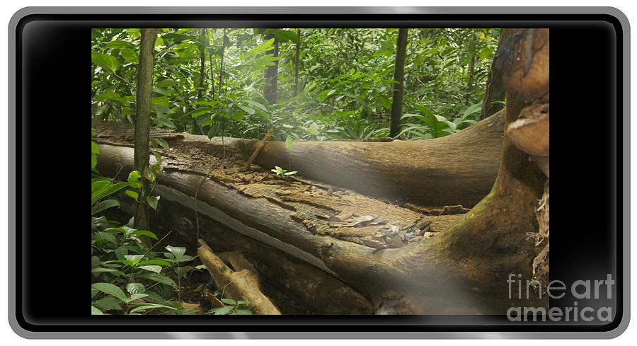 Great Apes Vanishing Habitats - Ruthless Exploitation - Rare Earths Electronics - Palm Oil Products Photograph
