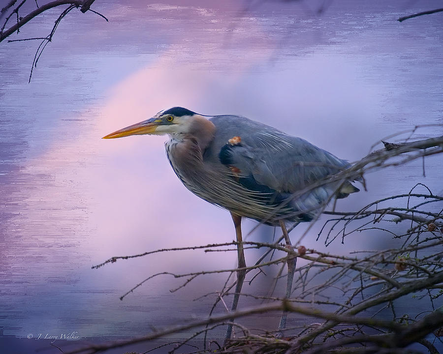 Walker Digital Art - Great Blue Heron Fishing by J Larry Walker