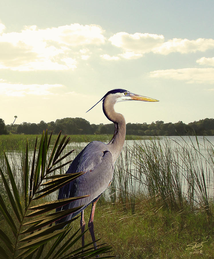 Bird Digital Art - Great Blue Heron In The Bulrushes by M Spadecaller