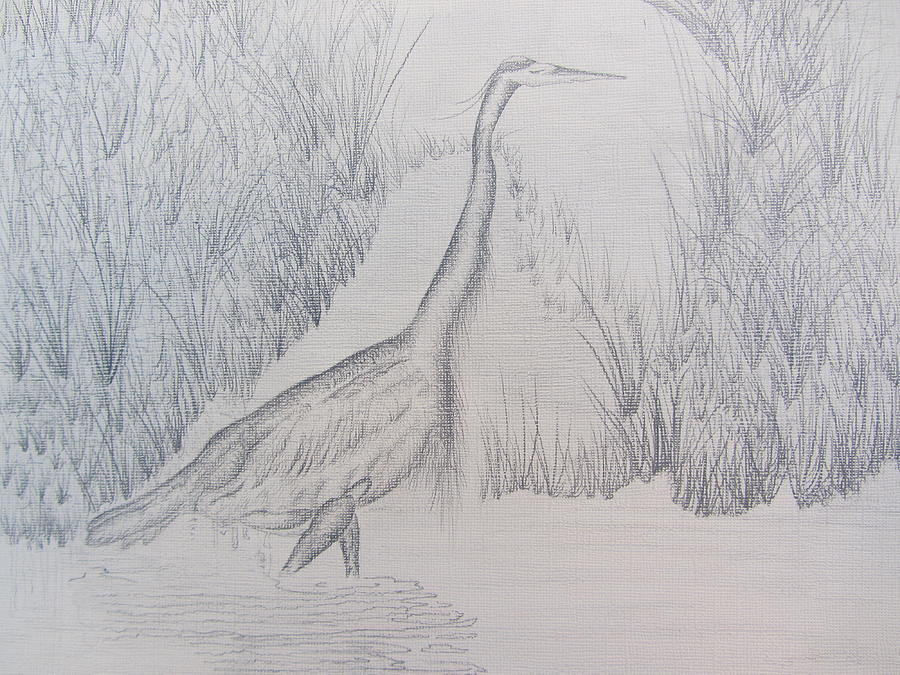 Great Blue Heron Drawing - Great Blue Heron Pencil Drawing by Debbie Nester