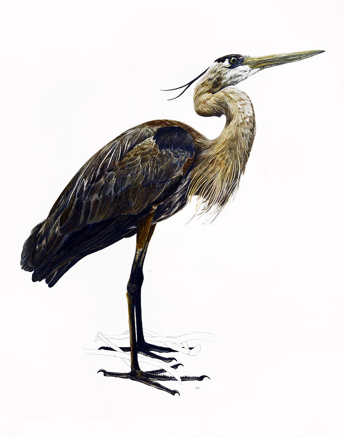 Heron Painting - Great Blue Heron by Rachel Root